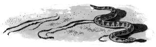 Ảnh đen trắng: Con rắn