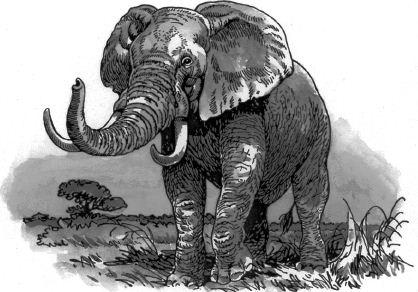 Ảnh đen trắng: Con voi