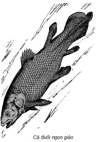 Ảnh đen trắng: Cá đuôi ngọn giáo