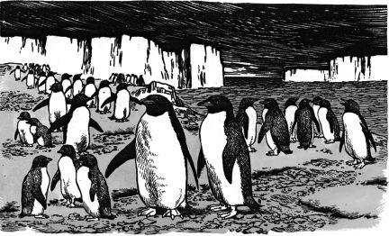Chim cánh cụt sống theo bầy đàn ở Nam Cực