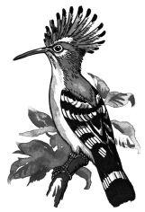 Ảnh đen trắng: Chim chào mào