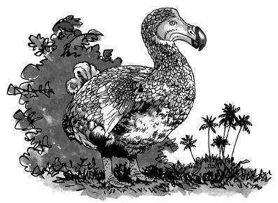 Chim Đô Đô