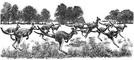 Ảnh đen trắng: Chuột túi có tập tính sống bầy đàn