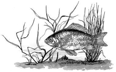 Con cá ngủ dưới nước