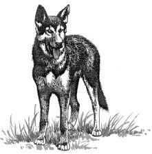 Con chó thường thè lưỡi vào mùa hè