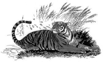 Con hổ trên đồng cỏ