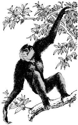 Con khỉ leo trèo trên cây