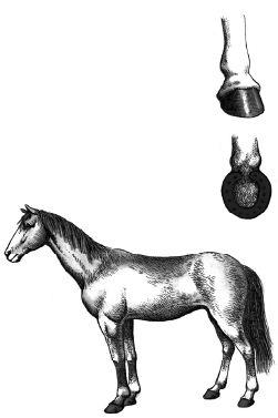 Con ngựa được đóng móng sắt
