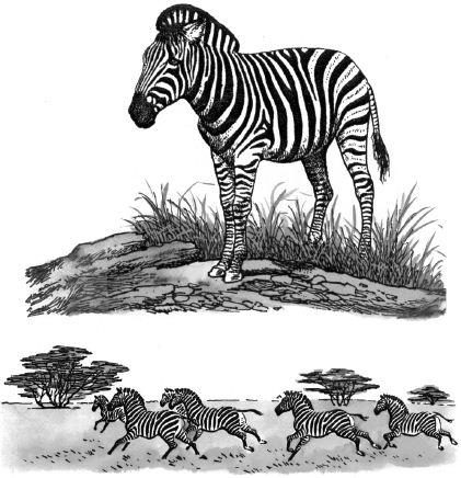 Con ngựa vằn và đàn ngựa vằn