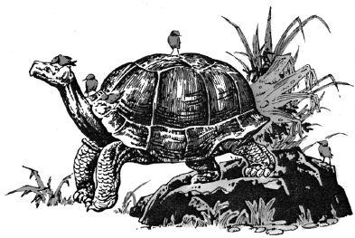Ảnh đen trắng: Con rùa có tuổi thọ cao