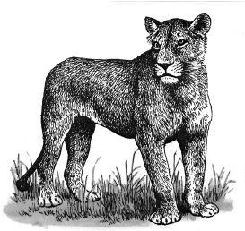 Con sư tử con