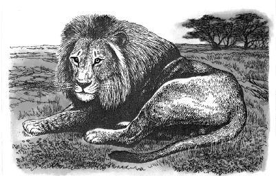 Con sư tử trên đồng cỏ