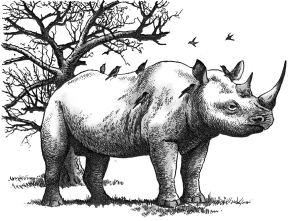 Đàn chim đậu trên lưng tê giác