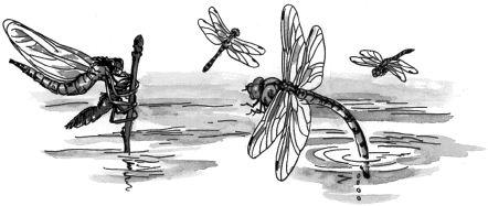 Ảnh đen trắng: Đàn chuồn chuồn