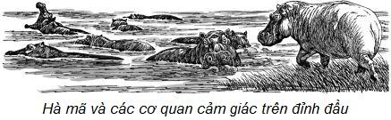 Đàn hà mã dưới dòng sông