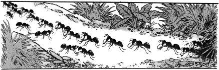 Ảnh đen trắng: Đàn kiến