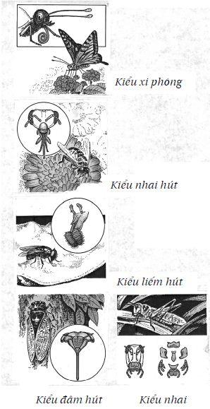 Giác quan hai bên miệng của côn trùng