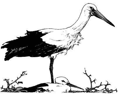 Hai con chim trong tổ
