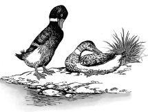 Hai con vịt bên bờ hồ