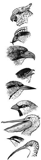 Mỏ chim có nhiều hình dạng