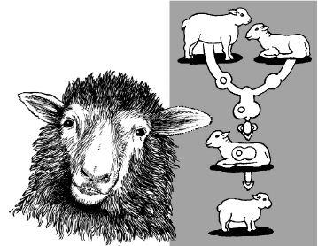 Ảnh đen trắng: Nhân bản vô tính cừu Dolly