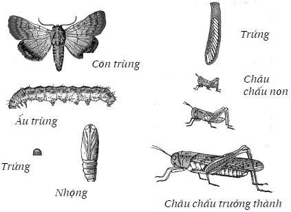 Vòng đời của côn trùng
